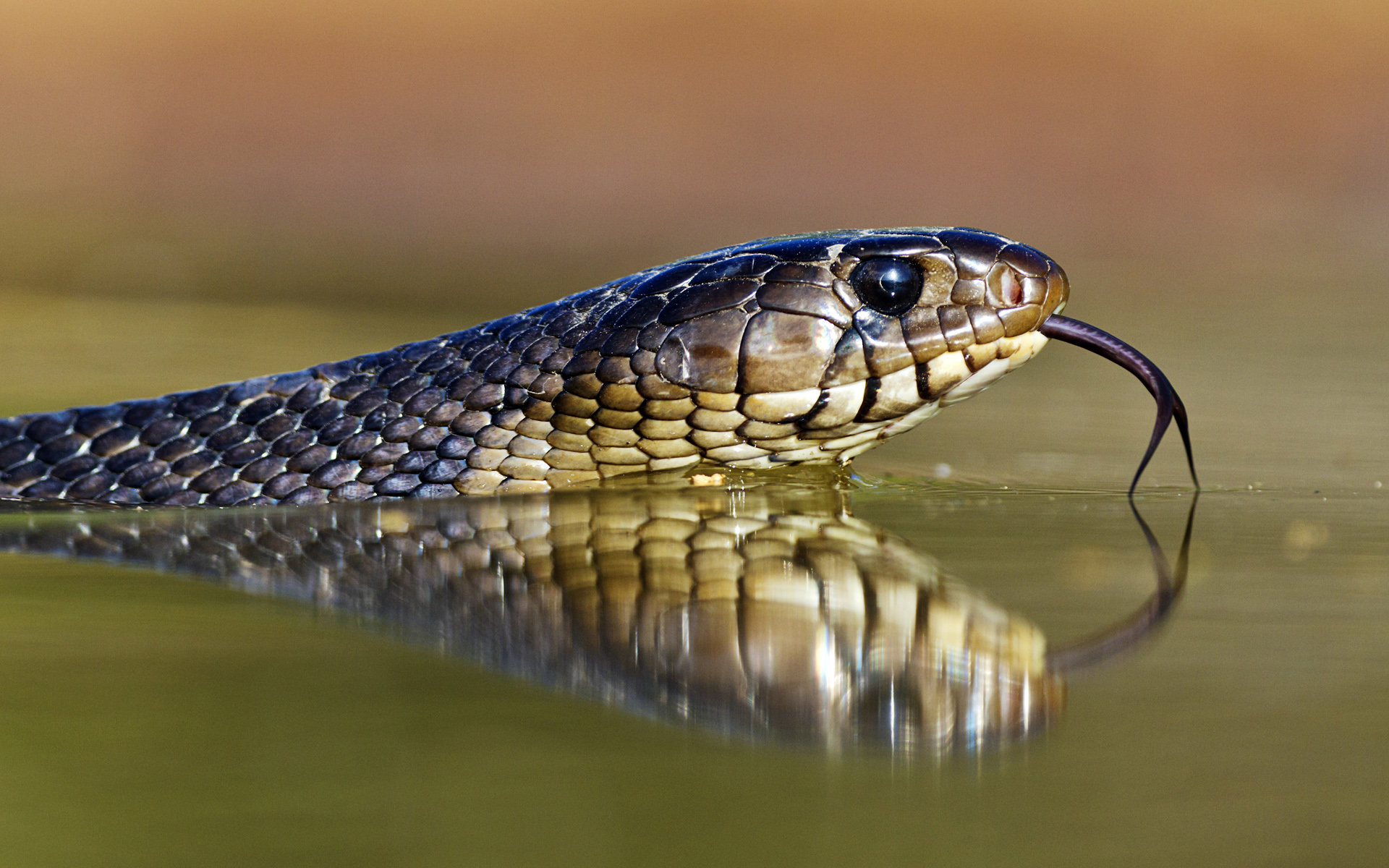 Awesome Snake free background ID:137288 for hd 1920x1200 computer