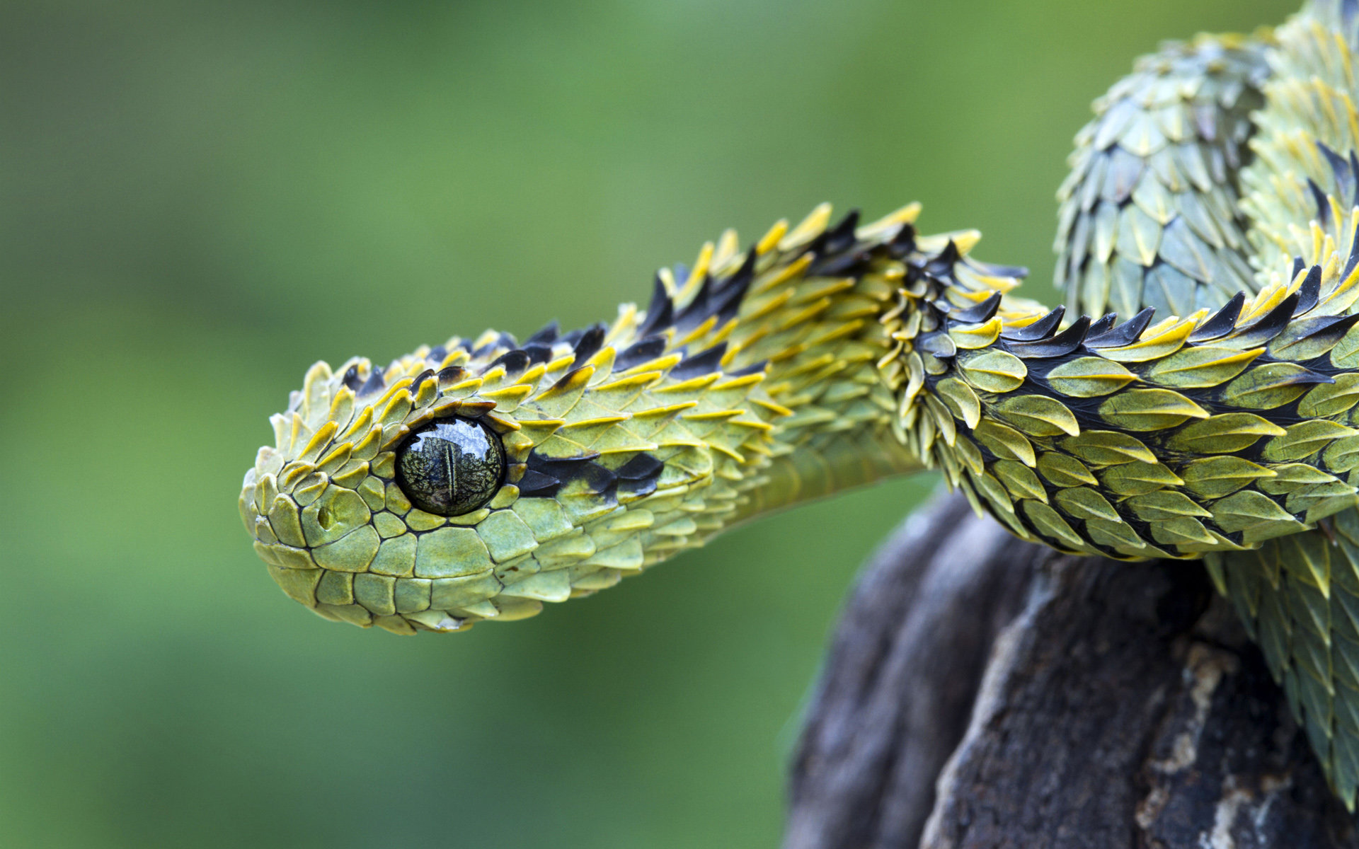Awesome Viper snake free background ID:89900 for hd 1920x1200 computer