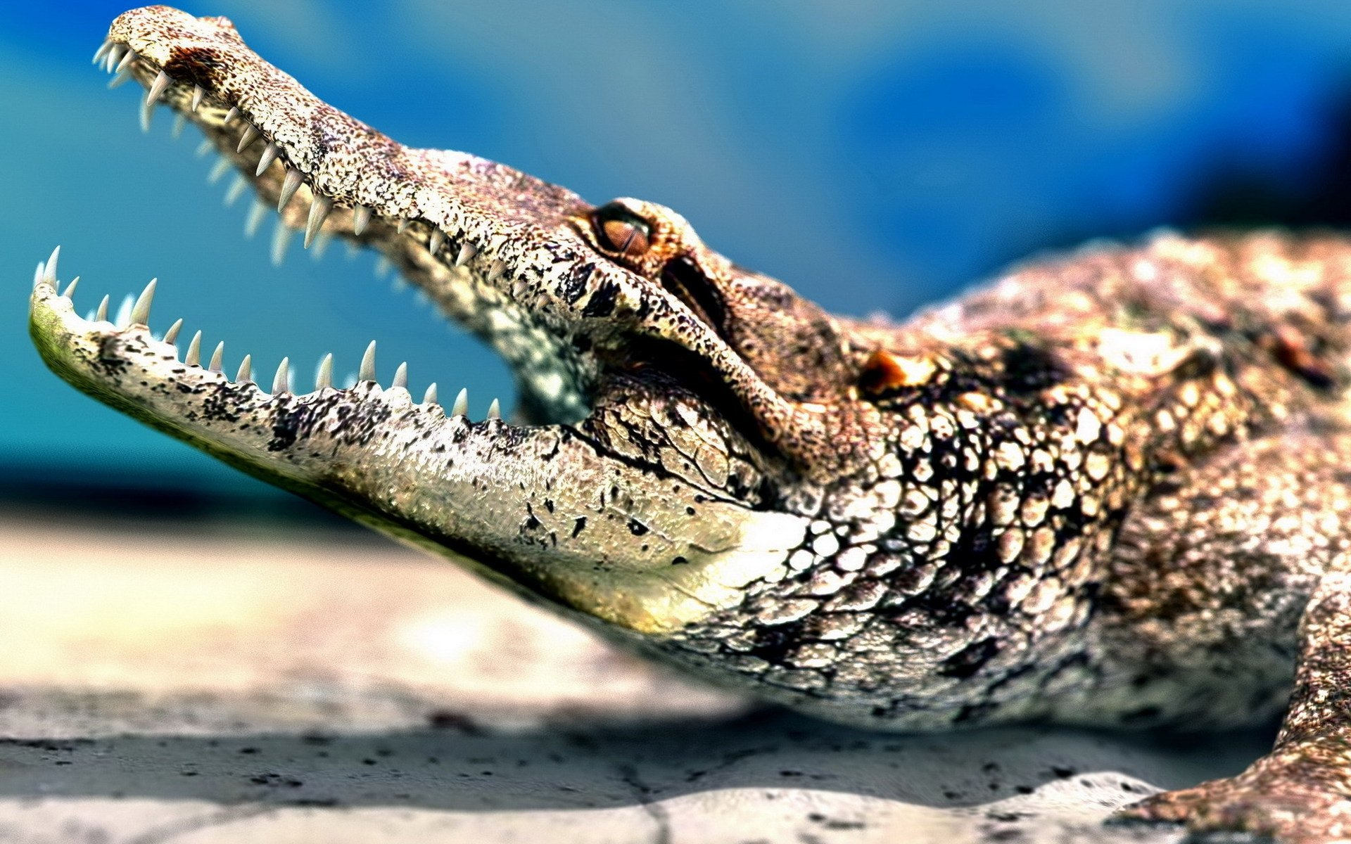 Awesome Crocodile free wallpaper ID:278181 for hd 1920x1200 PC