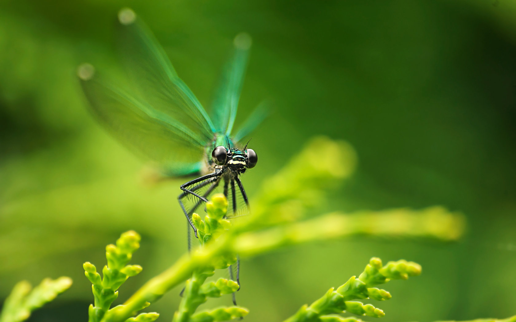 Awesome Dragonfly free background ID:467629 for hd 1680x1050 PC
