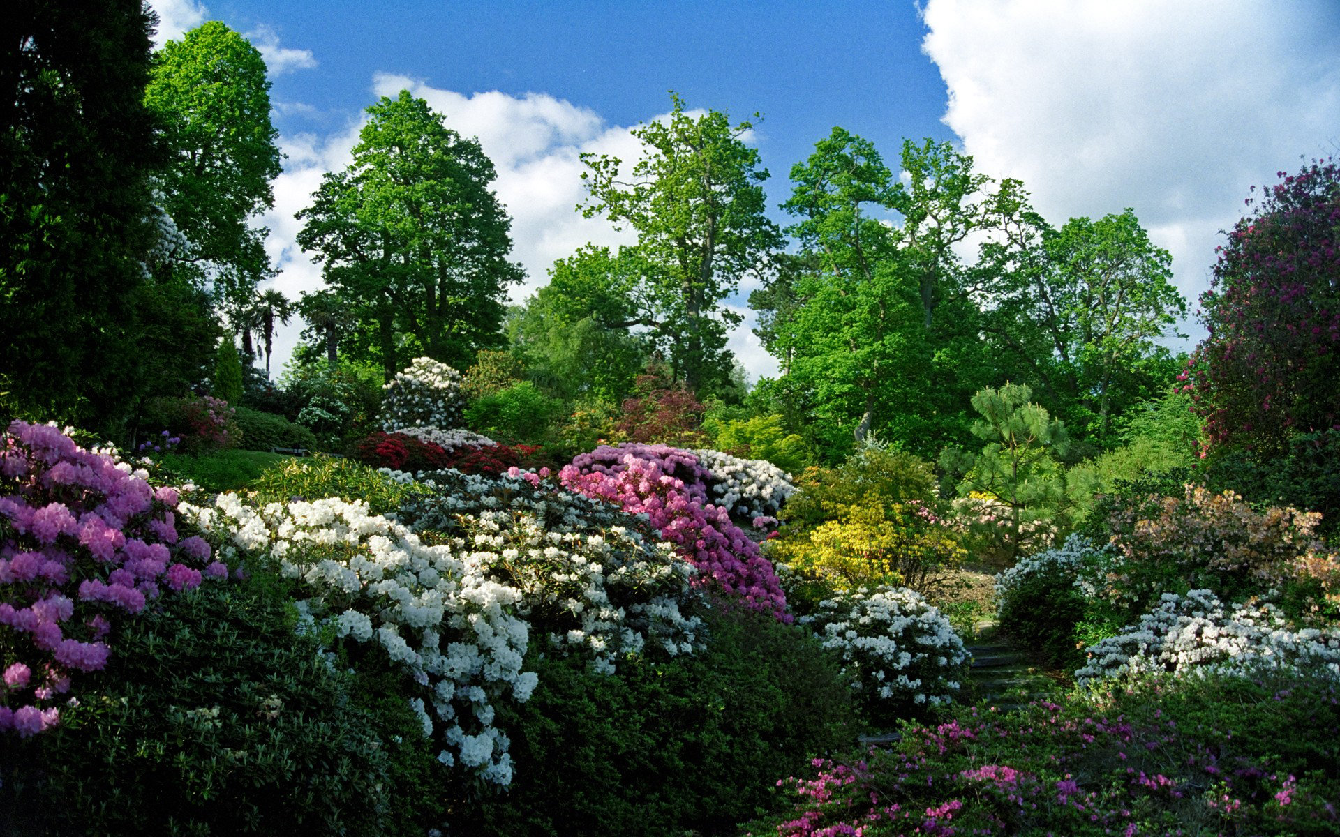 Free Download Garden Background Id 397068 Hd 1920x1200 For Computer