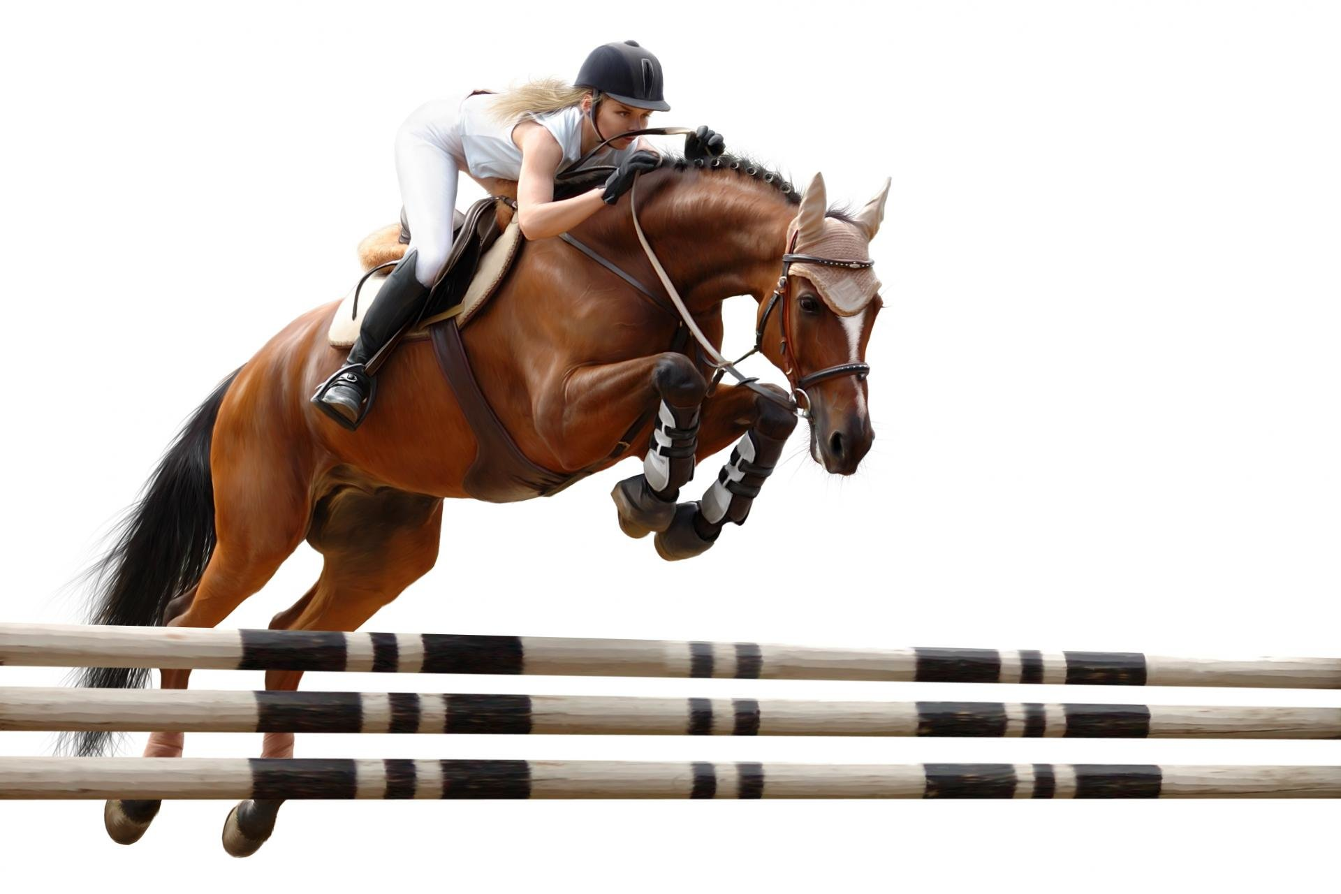 Horse Jumping Wallpapers Hd For Desktop Backgrounds