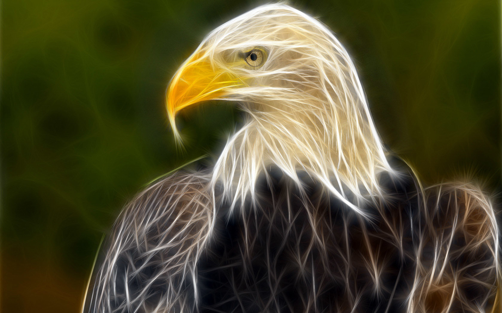Free Eagle high quality background ID:231445 for hd 1680x1050 PC