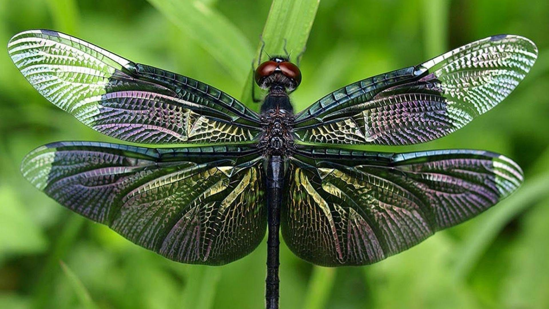 Free Dragonfly high quality background ID:467532 for hd 1080p PC