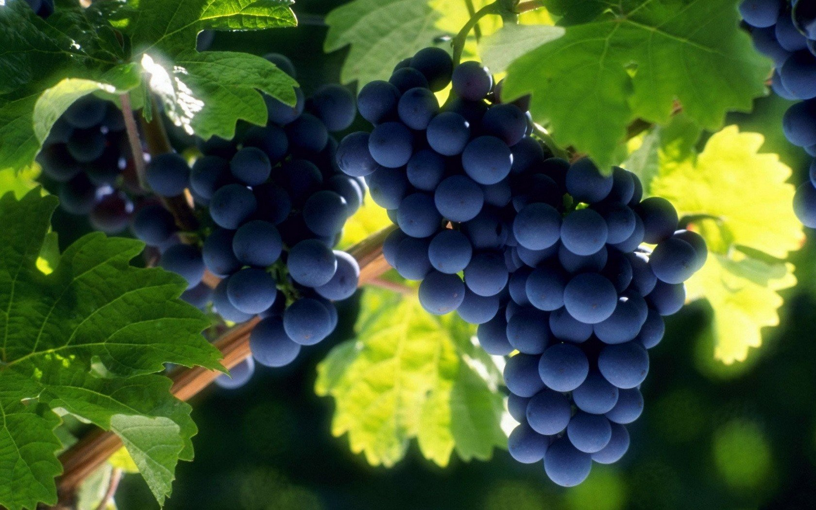 Awesome Grapes free background ID:420835 for hd 1680x1050 PC