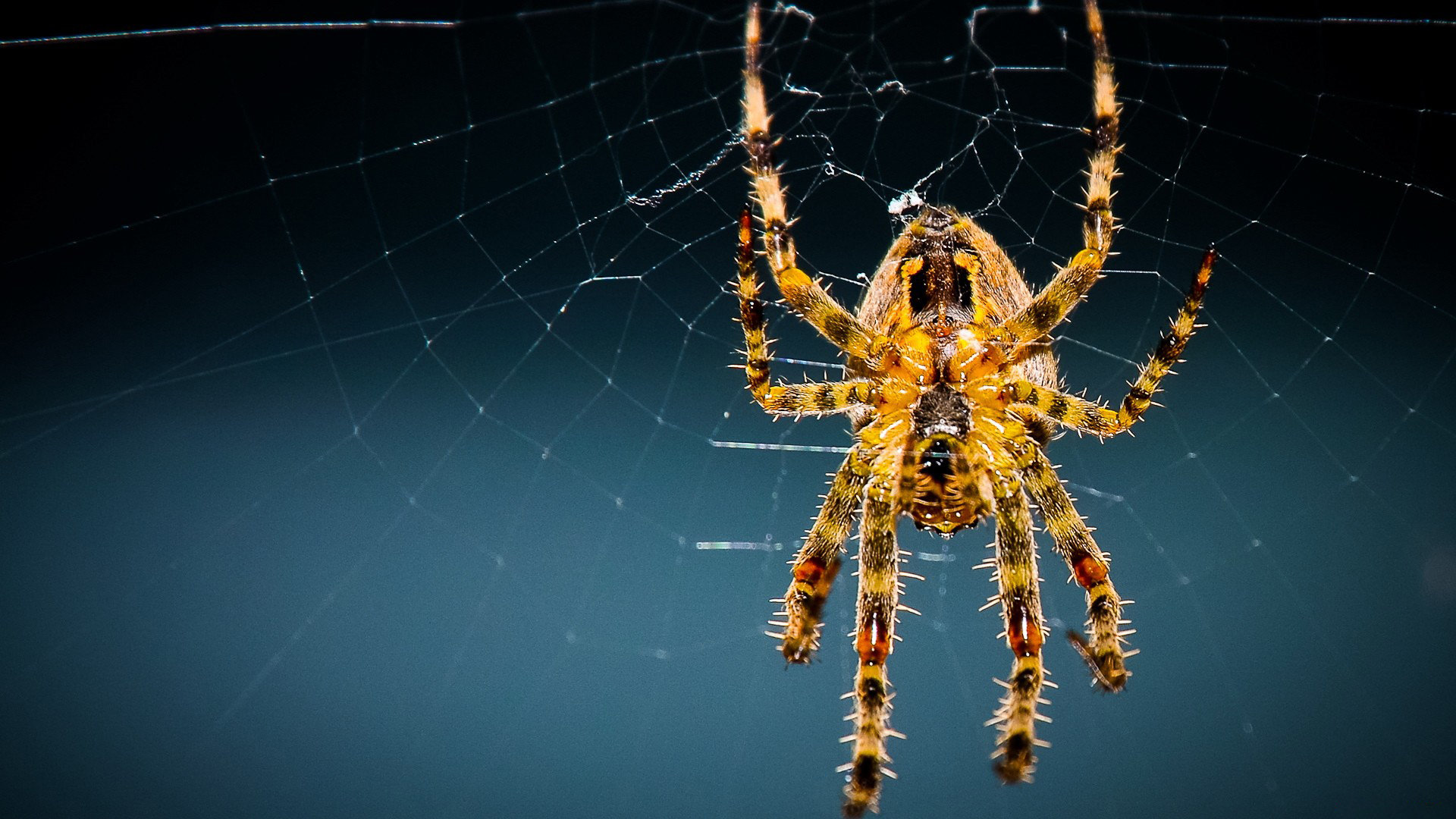 Free download Spider background ID:22083 full hd 1920x1080 for PC