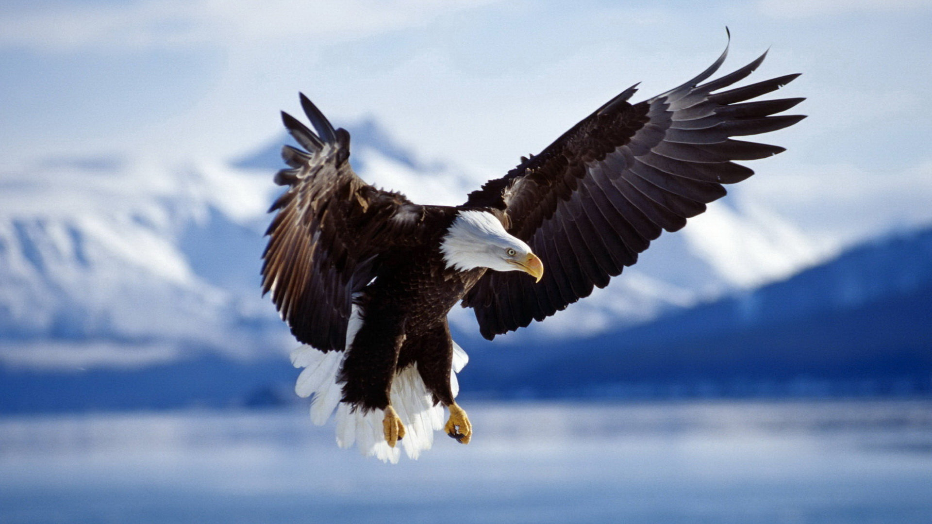 Download hd 1920x1080 Eagle desktop background ID:231131 for free
