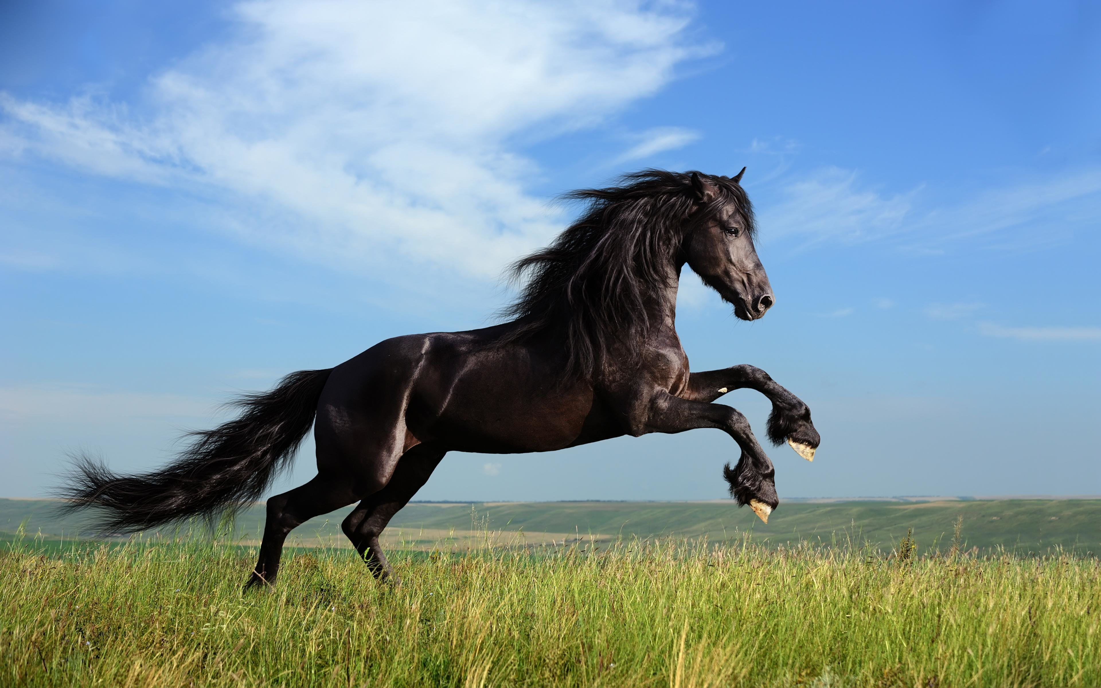 Awesome Horse free wallpaper ID:23160 for hd 3840x2400 computer