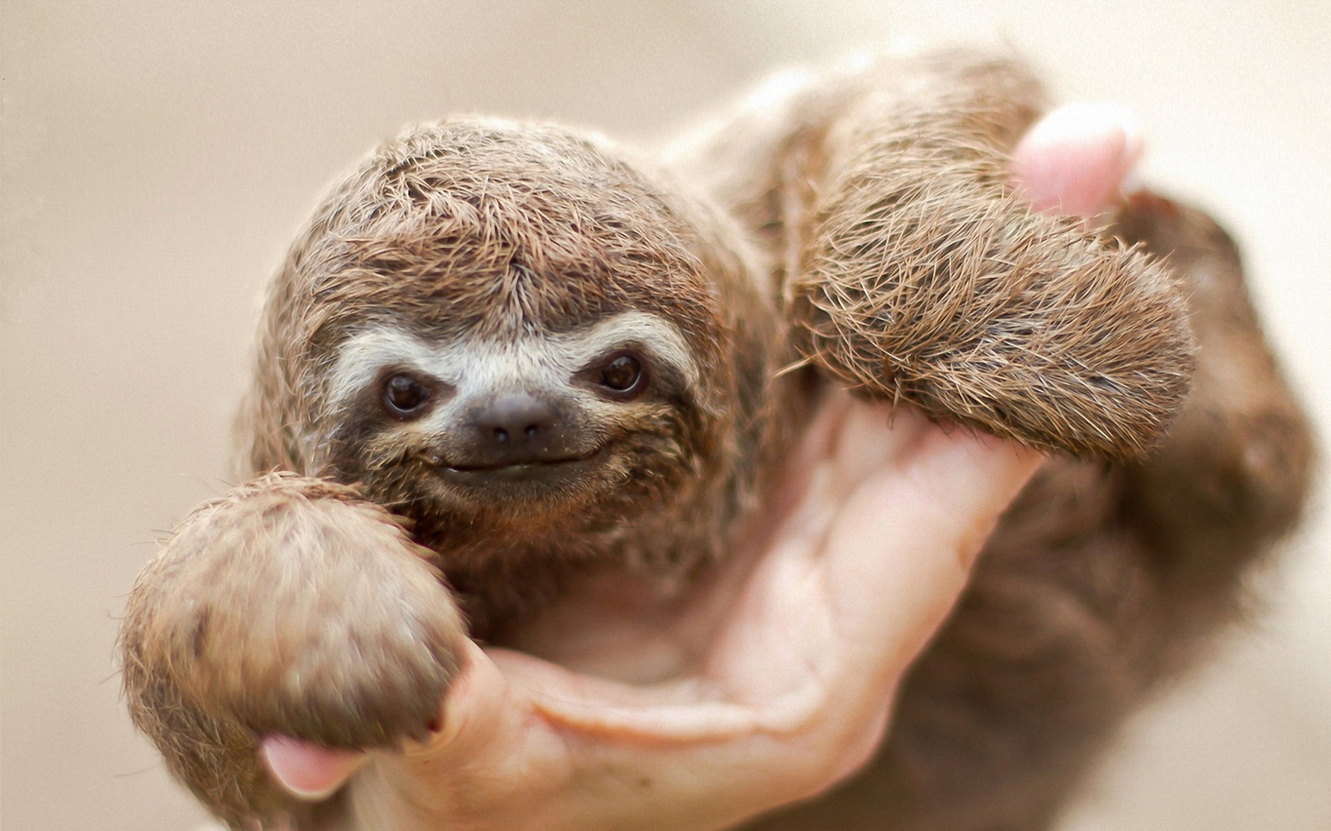 Free download Sloth wallpaper ID:68364 hd 1920x1200 for computer