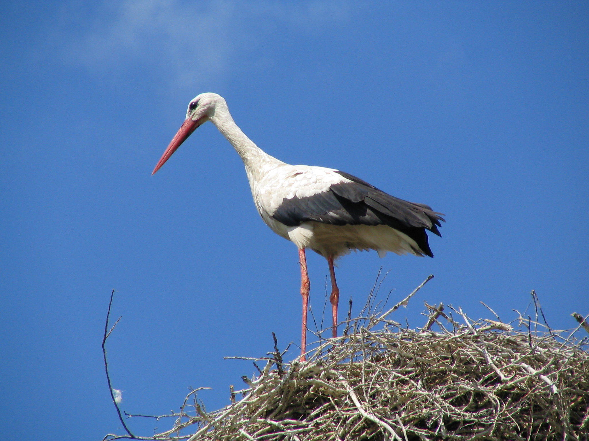 Download hd 2048x1536 White Stork PC wallpaper ID:9563 for free