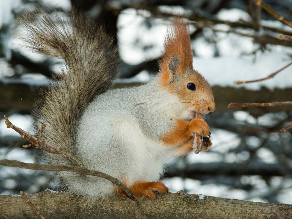 Best Squirrel background ID:311750 for High Resolution hd 1024x768 PC