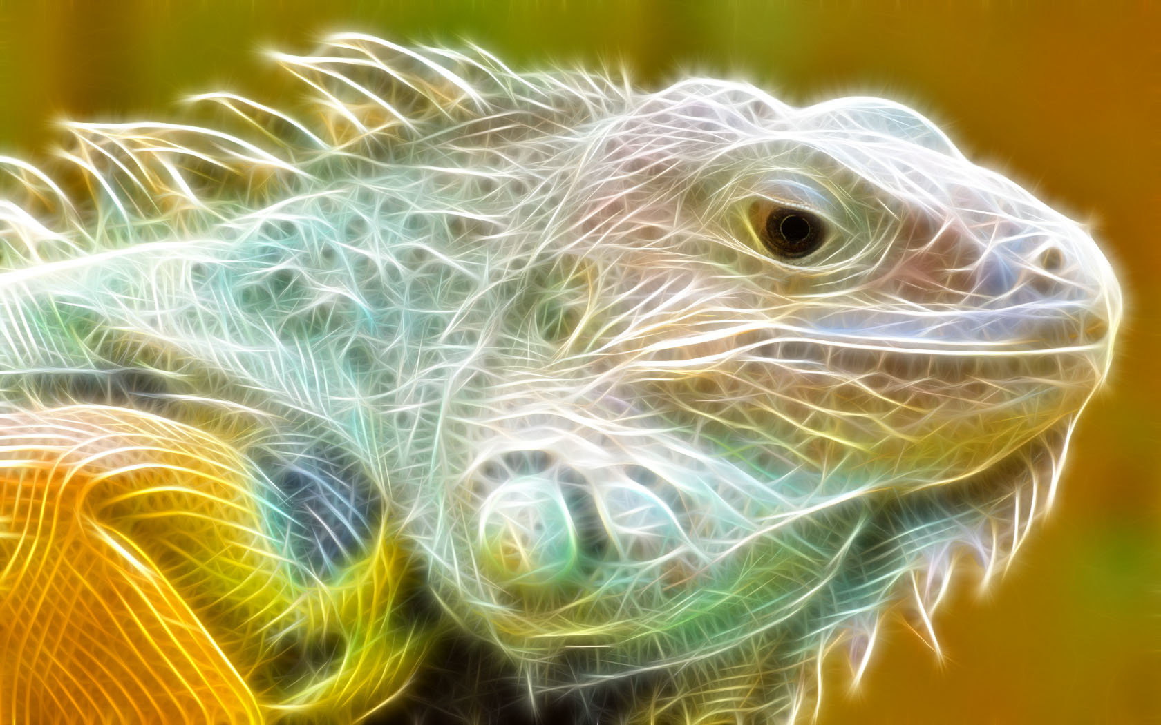 Free Iguana high quality wallpaper ID:380902 for hd 1680x1050 computer