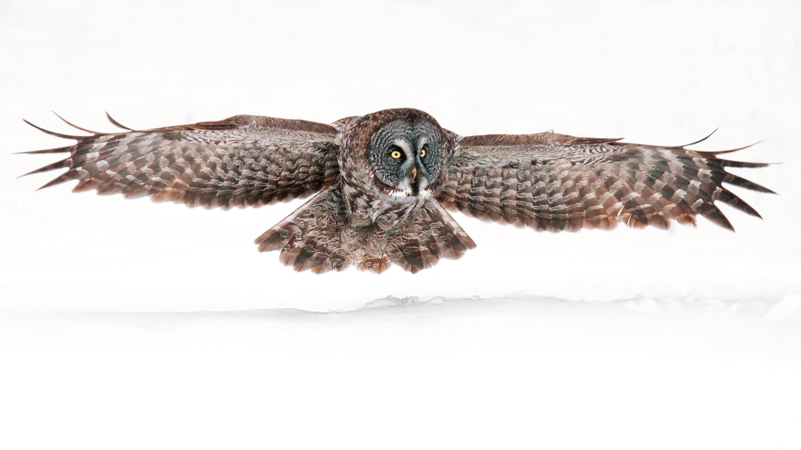 Free Owl high quality background ID:237119 for hd 2560x1440 desktop