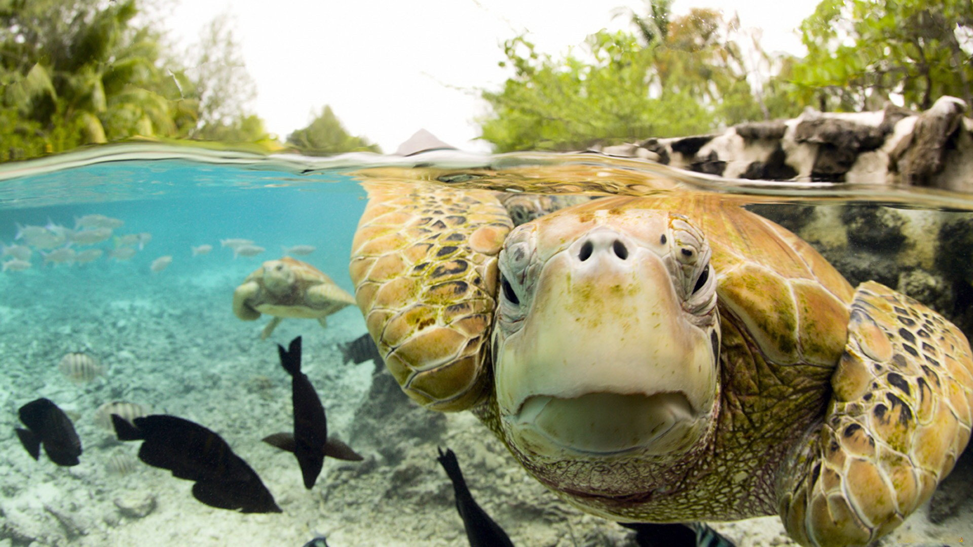Awesome Turtle free background ID:29857 for full hd 1080p desktop