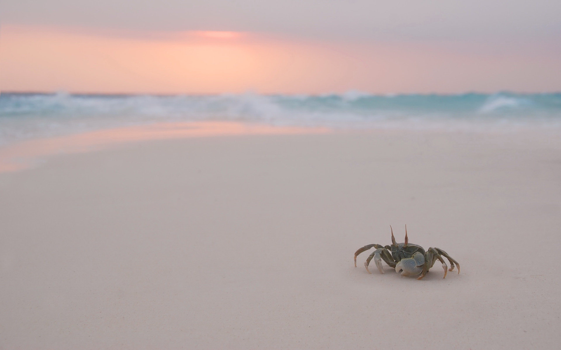 High resolution Crab hd 1920x1200 wallpaper ID:294337 for PC