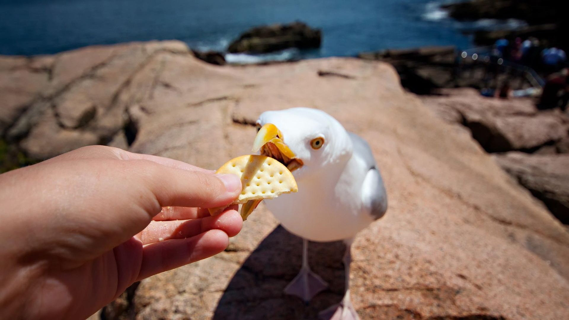Free Seagull high quality wallpaper ID:66988 for full hd PC