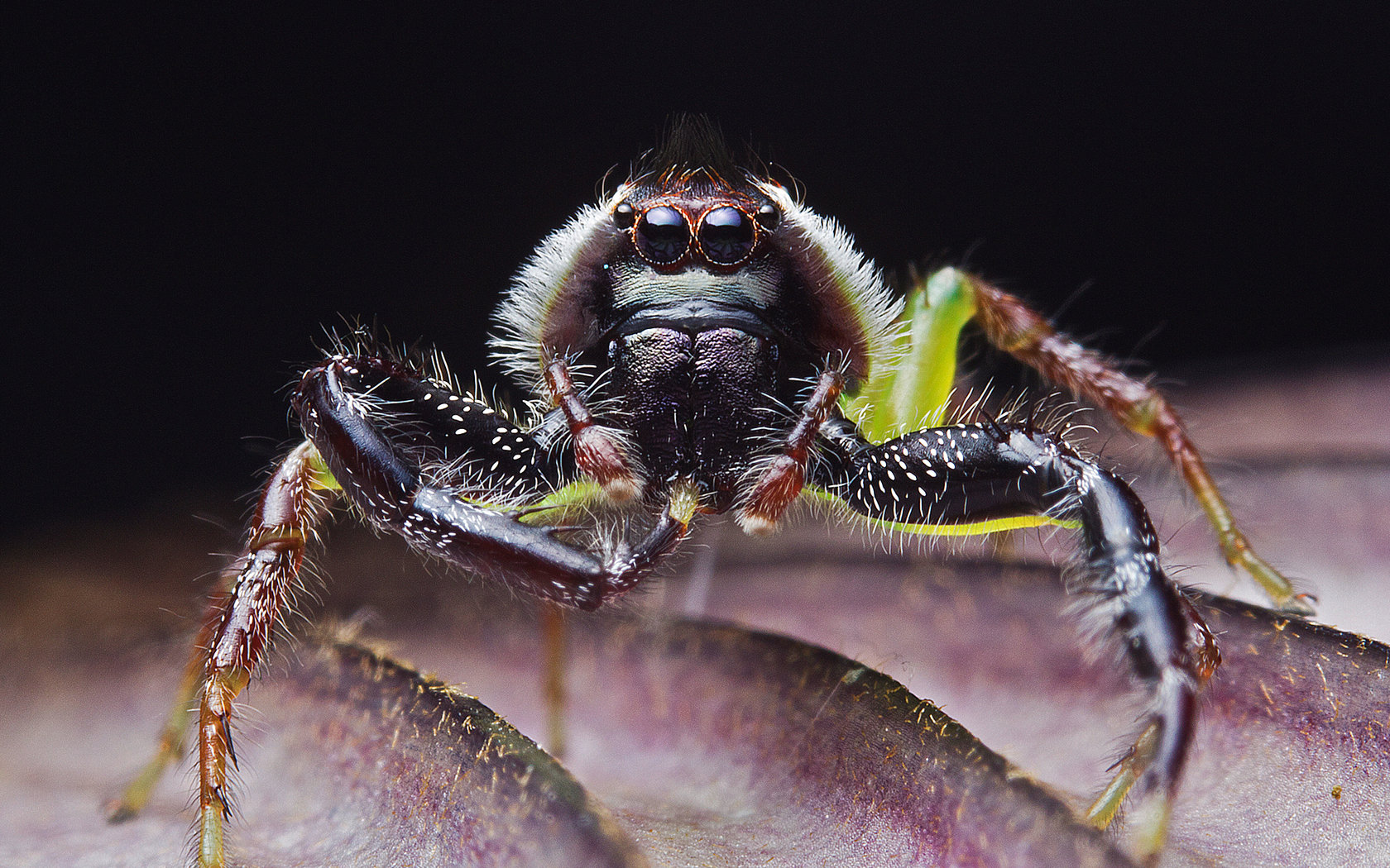 Free Spider high quality background ID:22278 for hd 1680x1050 PC