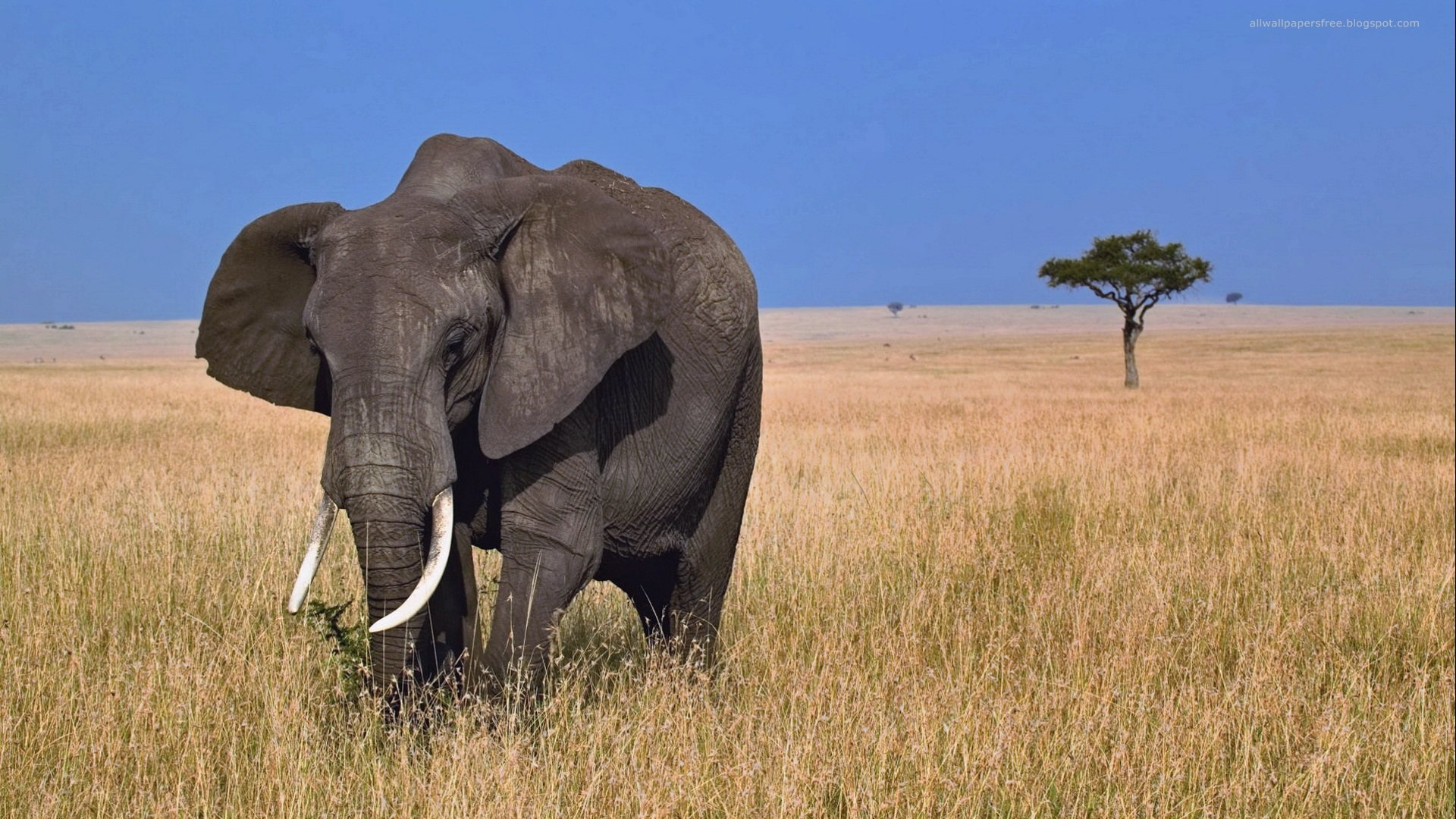 Free Elephant high quality background ID:132691 for full hd 1920x1080 PC