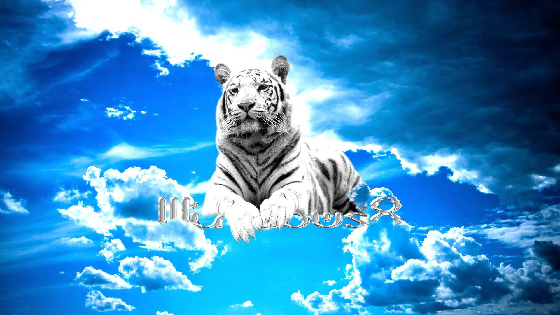 High resolution White Tiger hd 1080p wallpaper ID:174865 for desktop