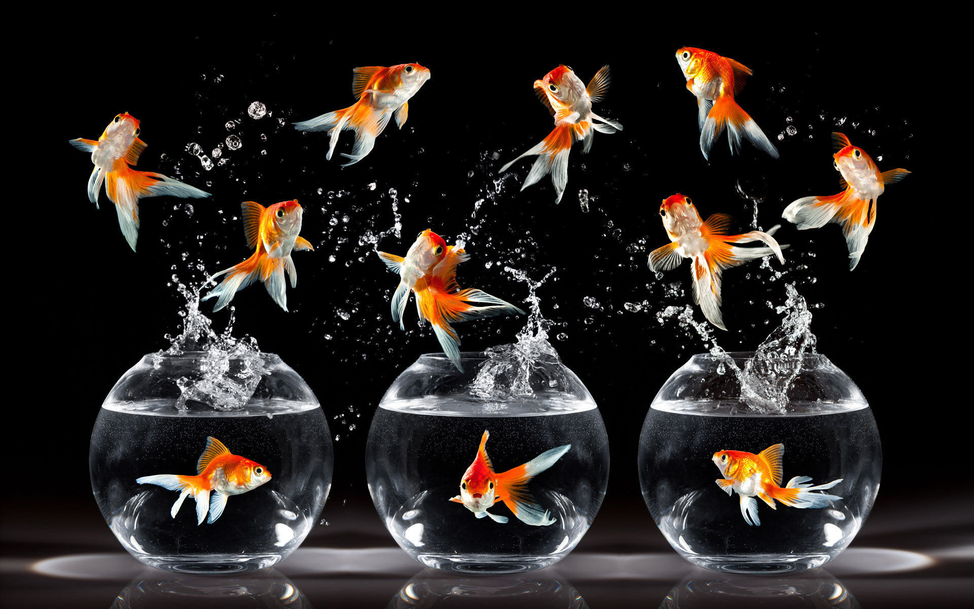 Free Goldfish high quality background ID:464119 for hd 1920x1200 desktop