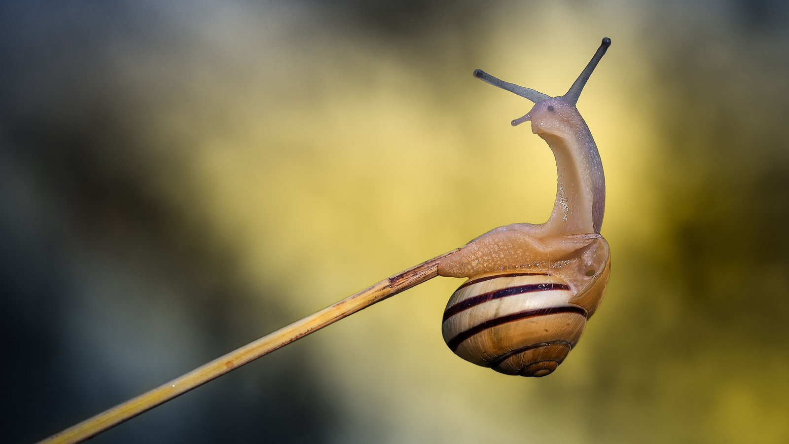 Free Snail high quality background ID:198844 for hd 1600x900 PC