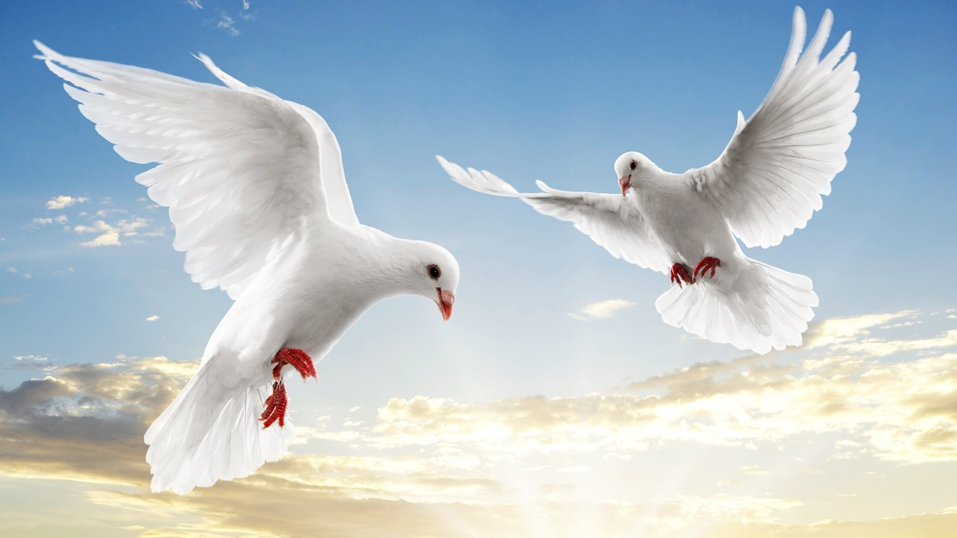 Awesome Dove free background ID:357282 for hd 1080p desktop