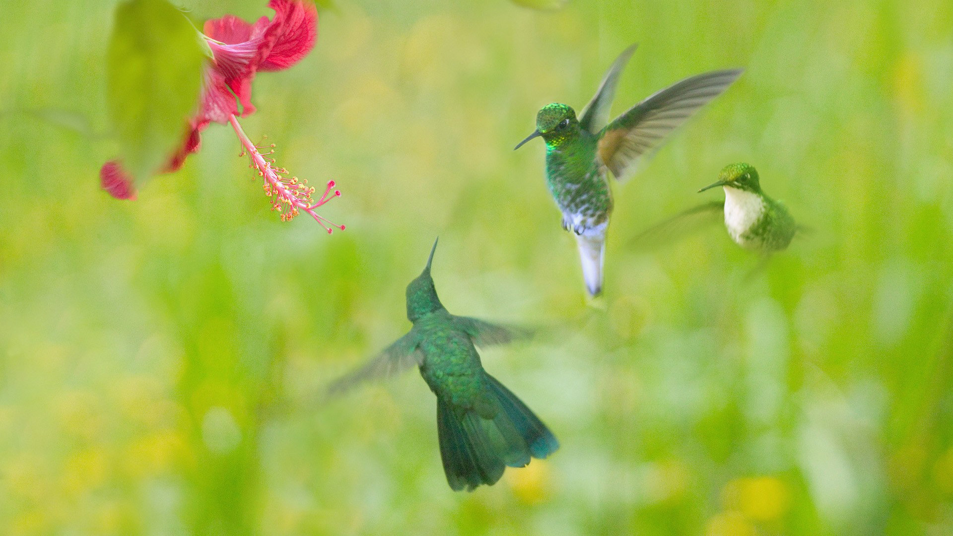 Awesome Hummingbird free wallpaper ID:215780 for hd 1920x1080 PC
