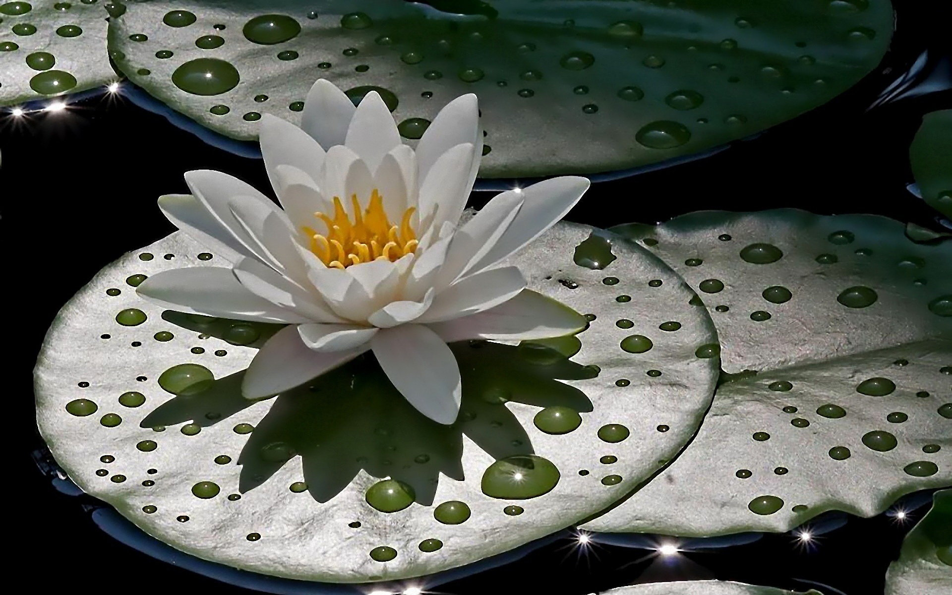 Best Water Lily wallpaper ID:366202 for High Resolution hd 1920x1200 desktop