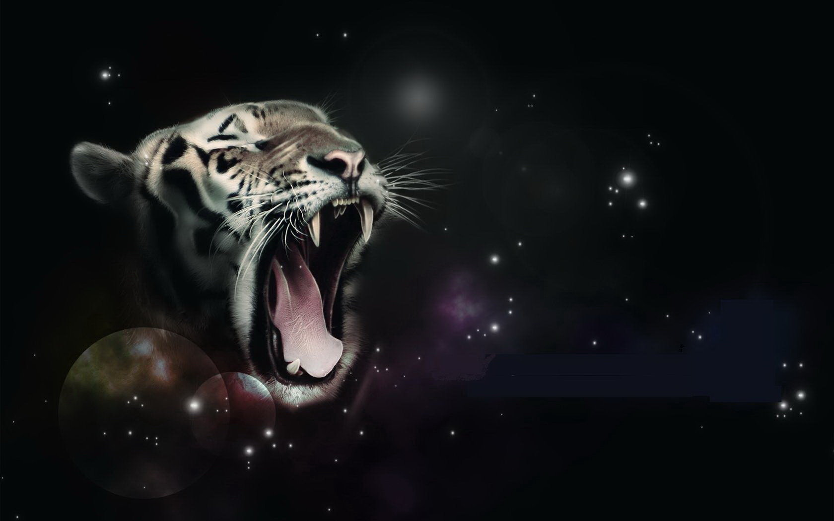 High resolution White Tiger hd 1680x1050 wallpaper ID:175025 for PC