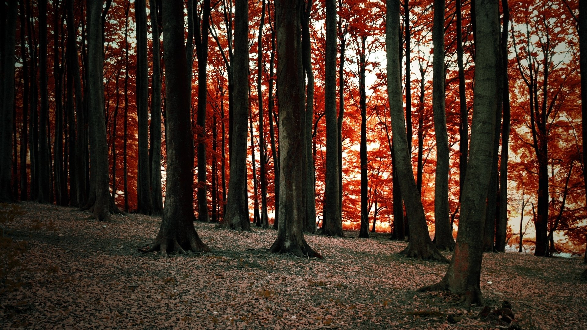 best forest wallpaper id 348514 for high resolution full hd