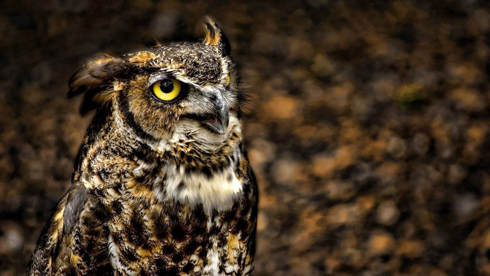 Download full hd 1920x1080 Great Horned Owl PC background ID:297776 for free