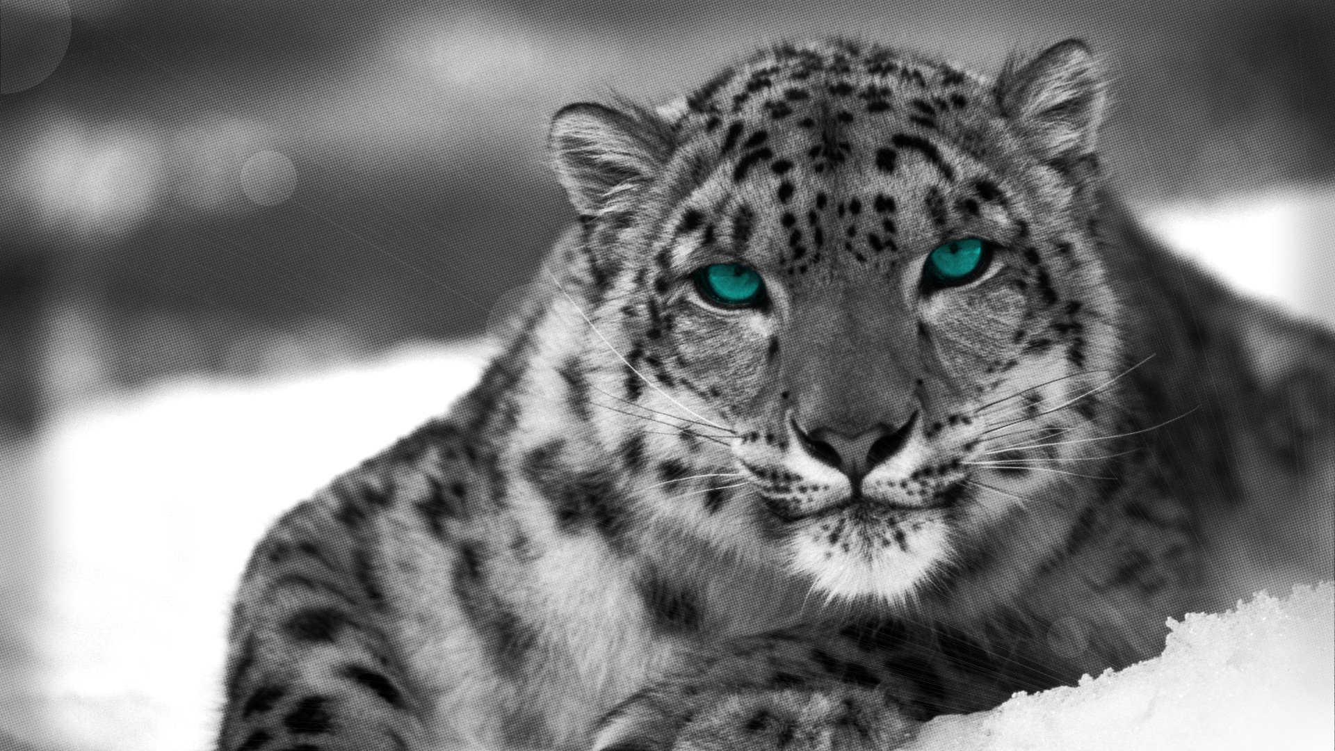 Free Snow Leopard high quality background ID:34516 for full hd desktop