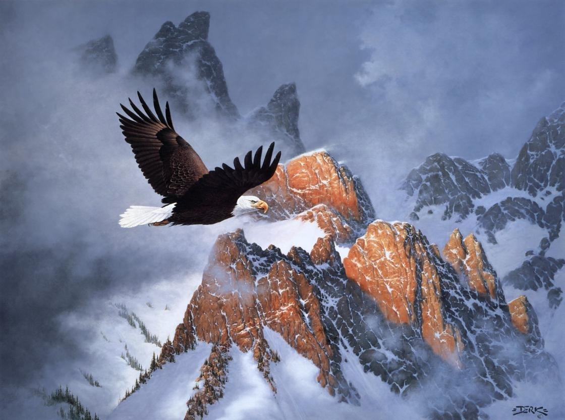 High Resolution American Bald Eagle Hd 1120x832 Wallpaper Id
