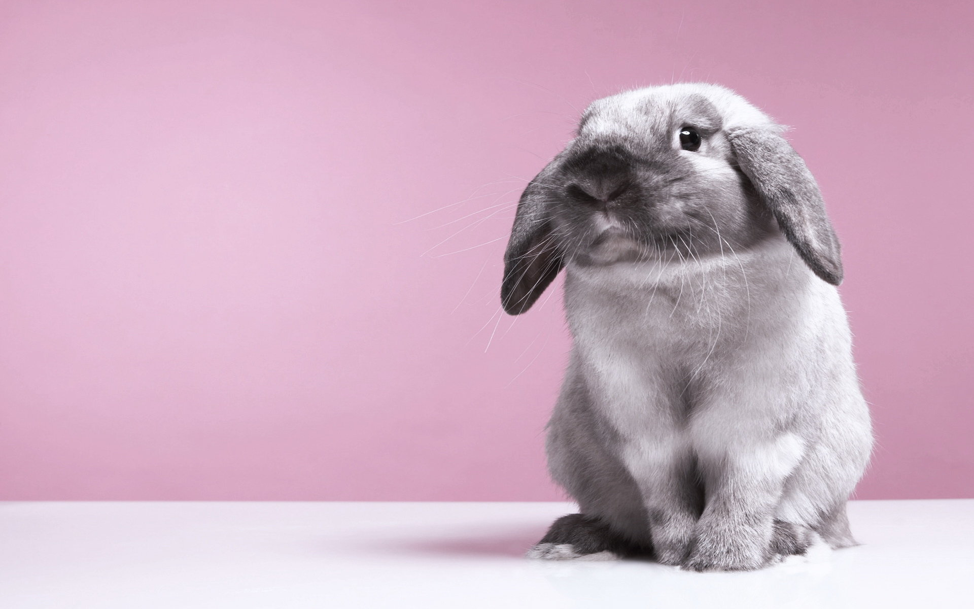Awesome Hare free wallpaper ID:81111 for hd 1920x1200 computer