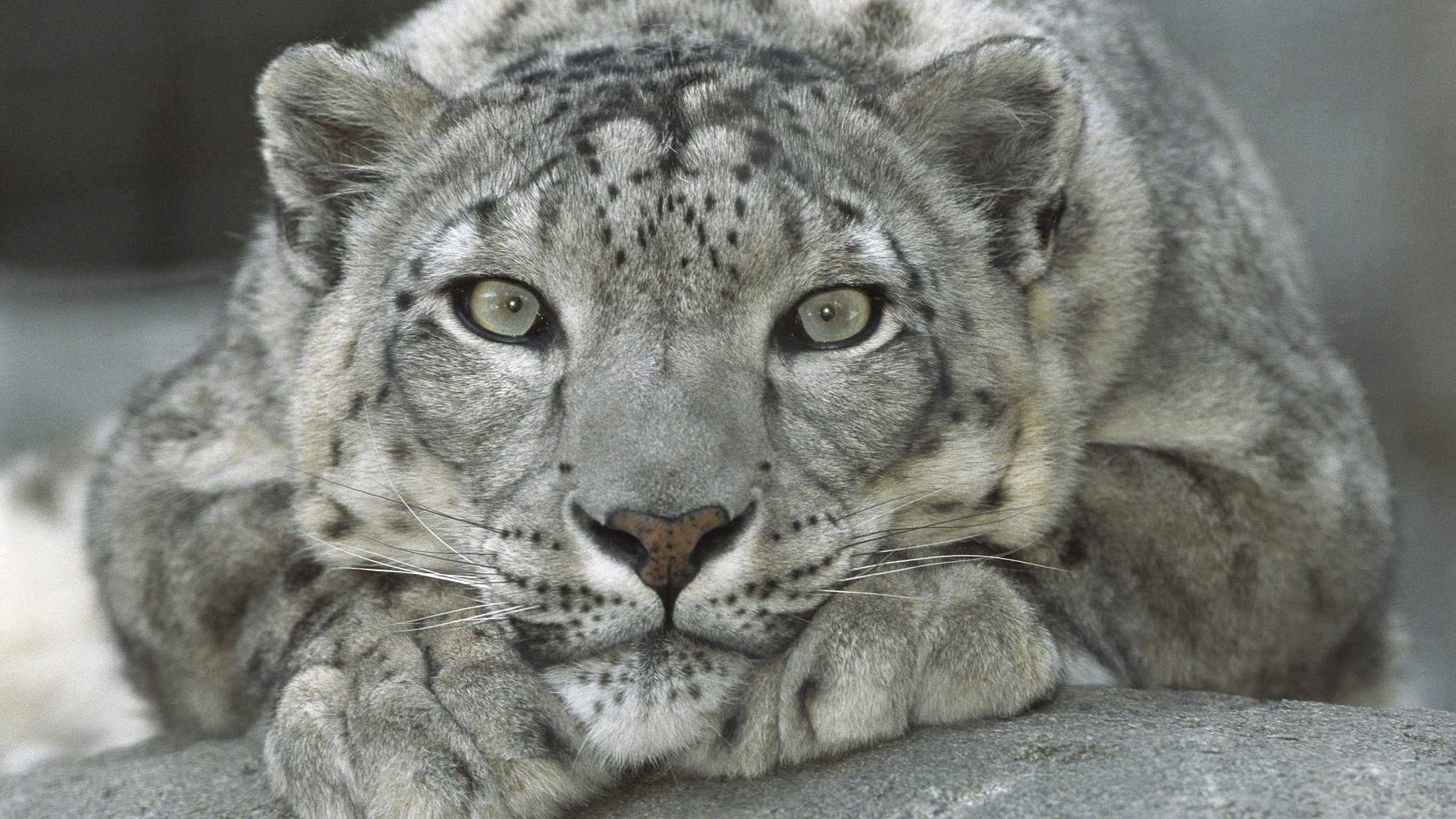 Download 1080p Snow Leopard PC wallpaper ID:34515 for free