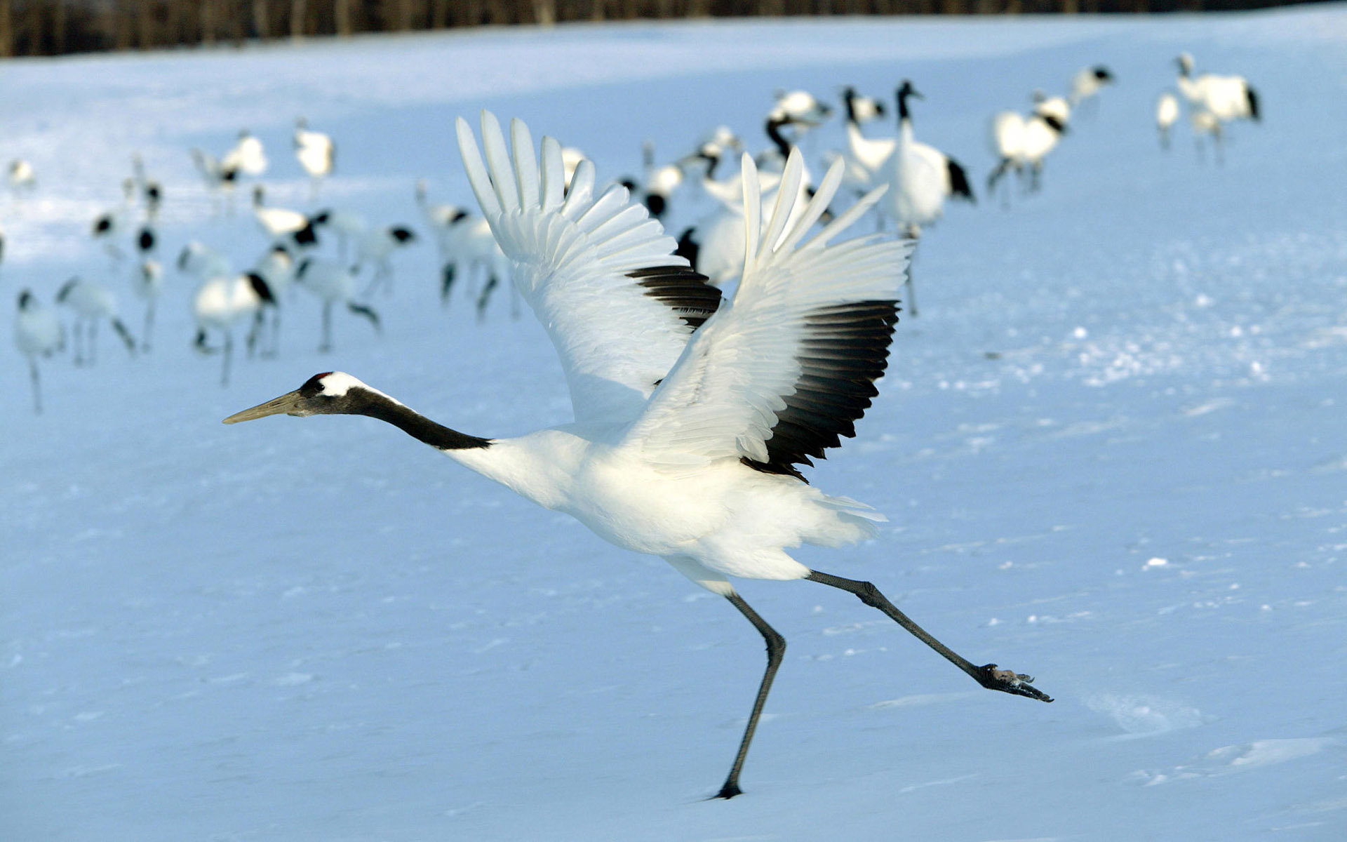 Awesome Crane free background ID:363631 for hd 1920x1200 PC