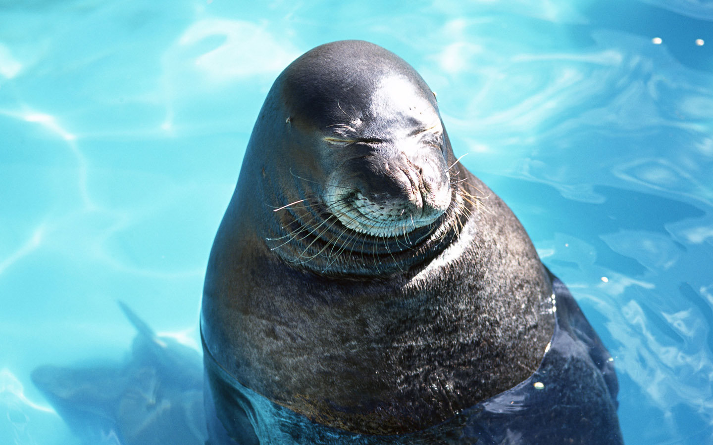 Awesome Seal free wallpaper ID:183386 for hd 1440x900 PC