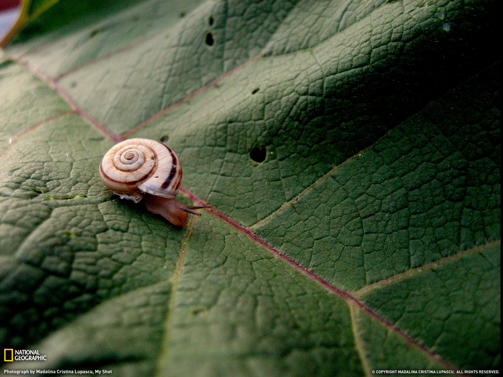 Awesome Snail free background ID:198803 for hd 1600x1200 desktop