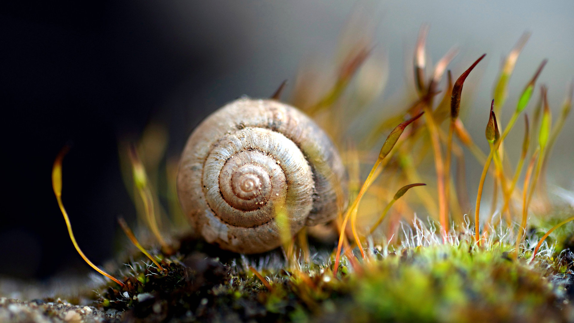 High resolution Snail 1080p wallpaper ID:198889 for PC