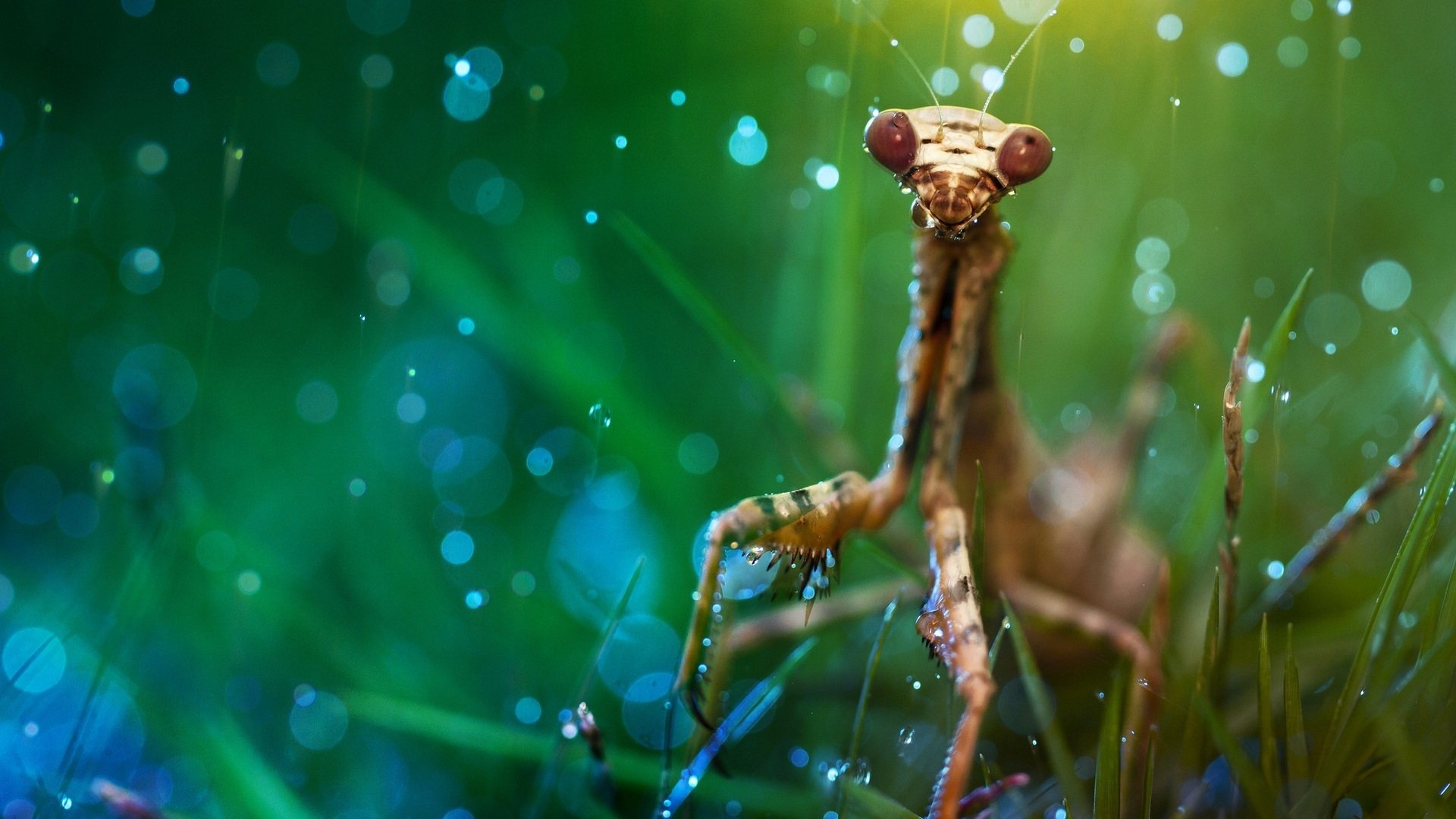Free Praying Mantis high quality background ID:156422 for full hd 1920x1080 PC