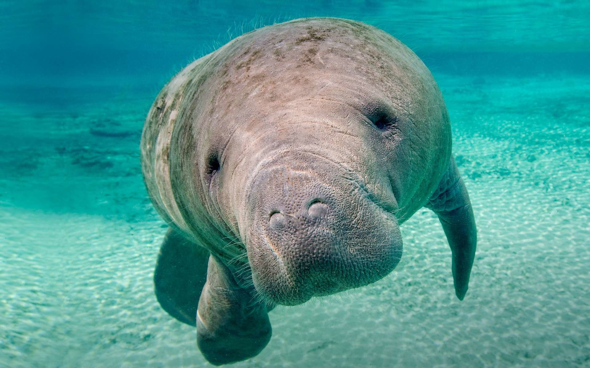 Awesome Manatee free background ID:43401 for hd 1920x1200 desktop