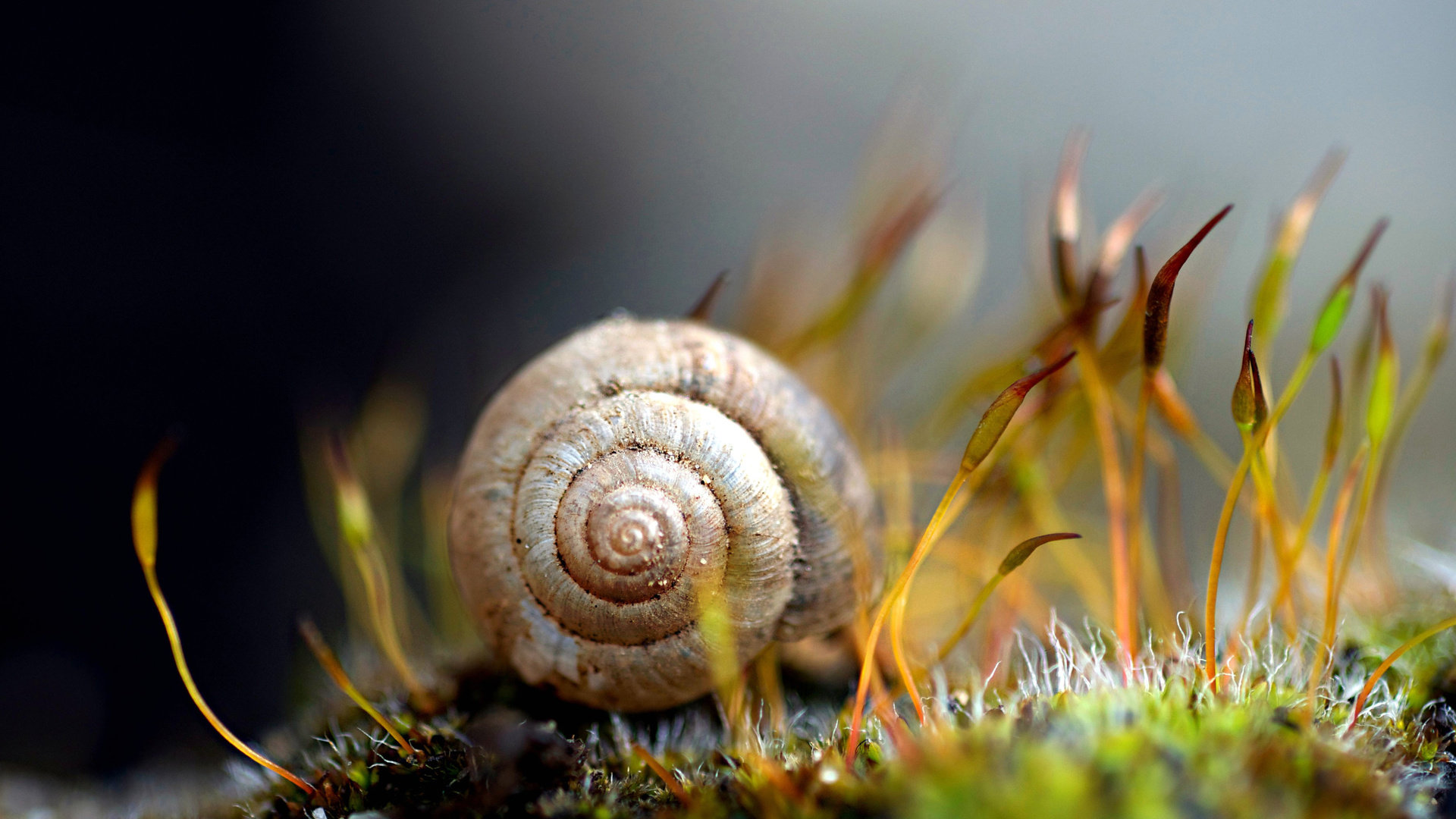 Download 1080p Snail desktop background ID:198834 for free