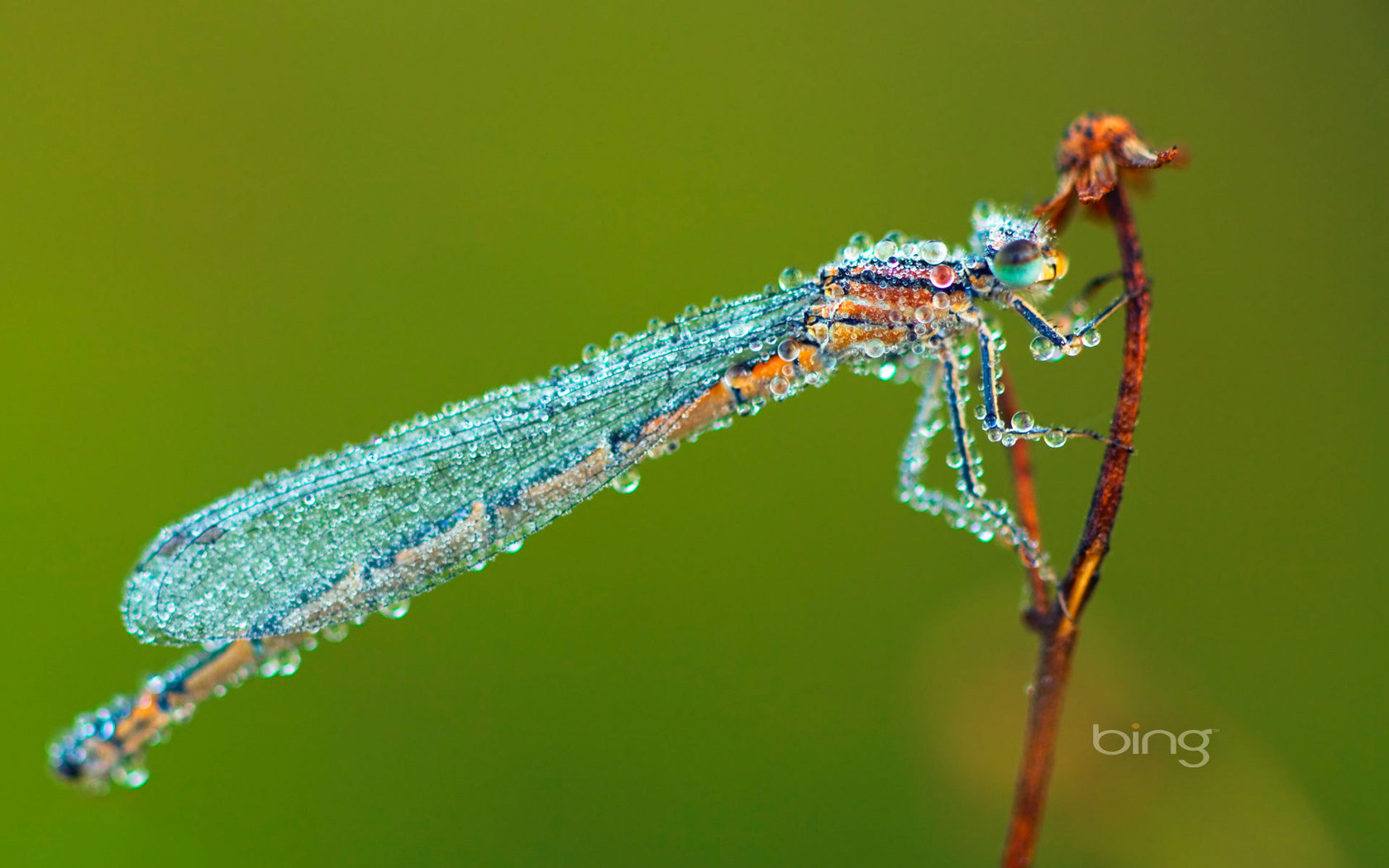 Awesome Dragonfly free wallpaper ID:467635 for hd 1680x1050 desktop