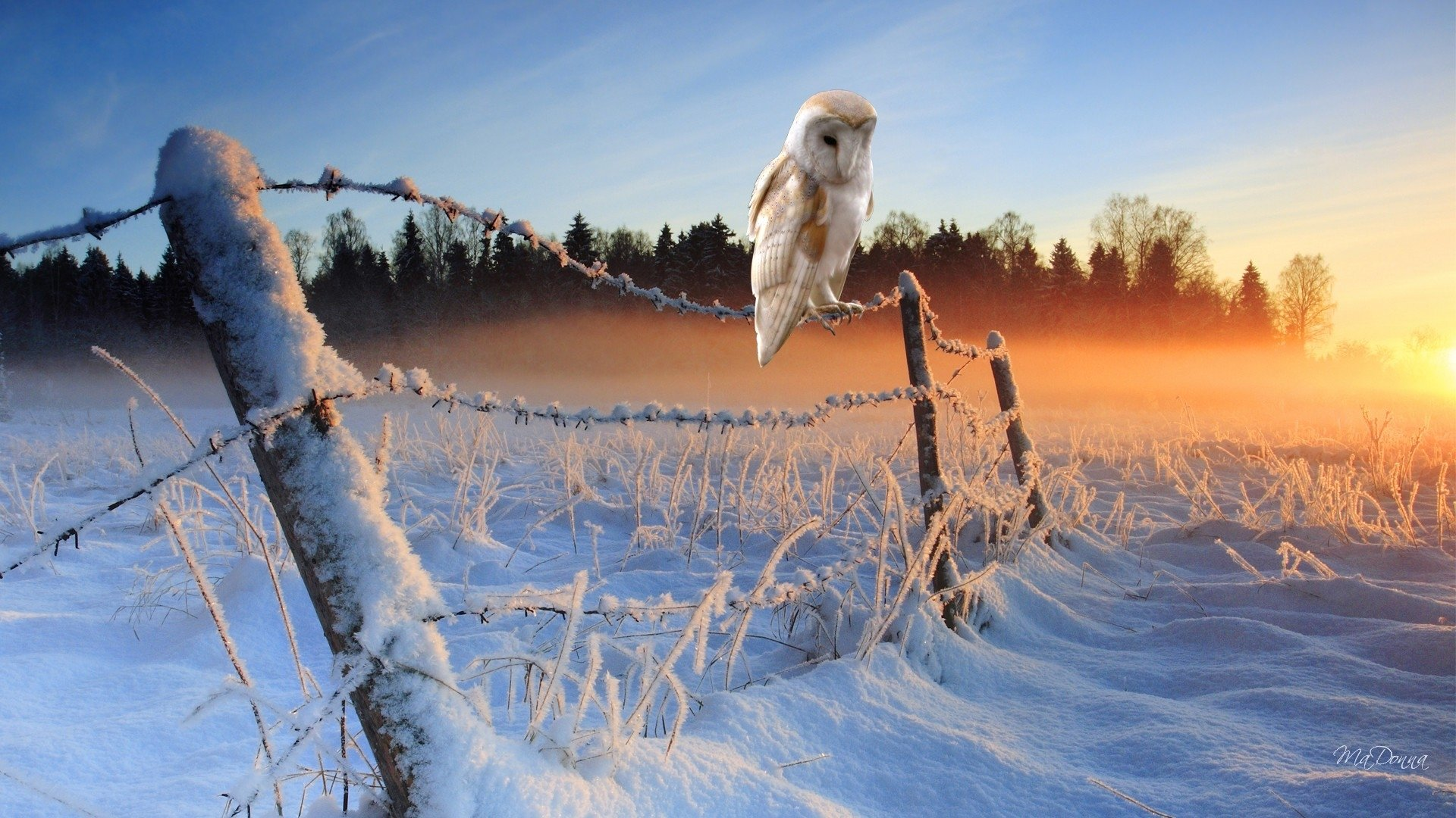 Free download Barn Owl background ID:81546 hd 1920x1080 for PC