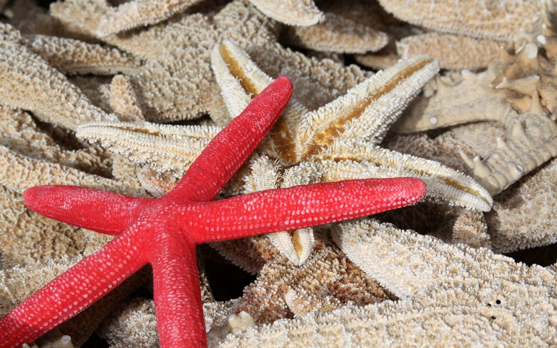 Best Starfish background ID:29692 for High Resolution hd 1920x1200 PC