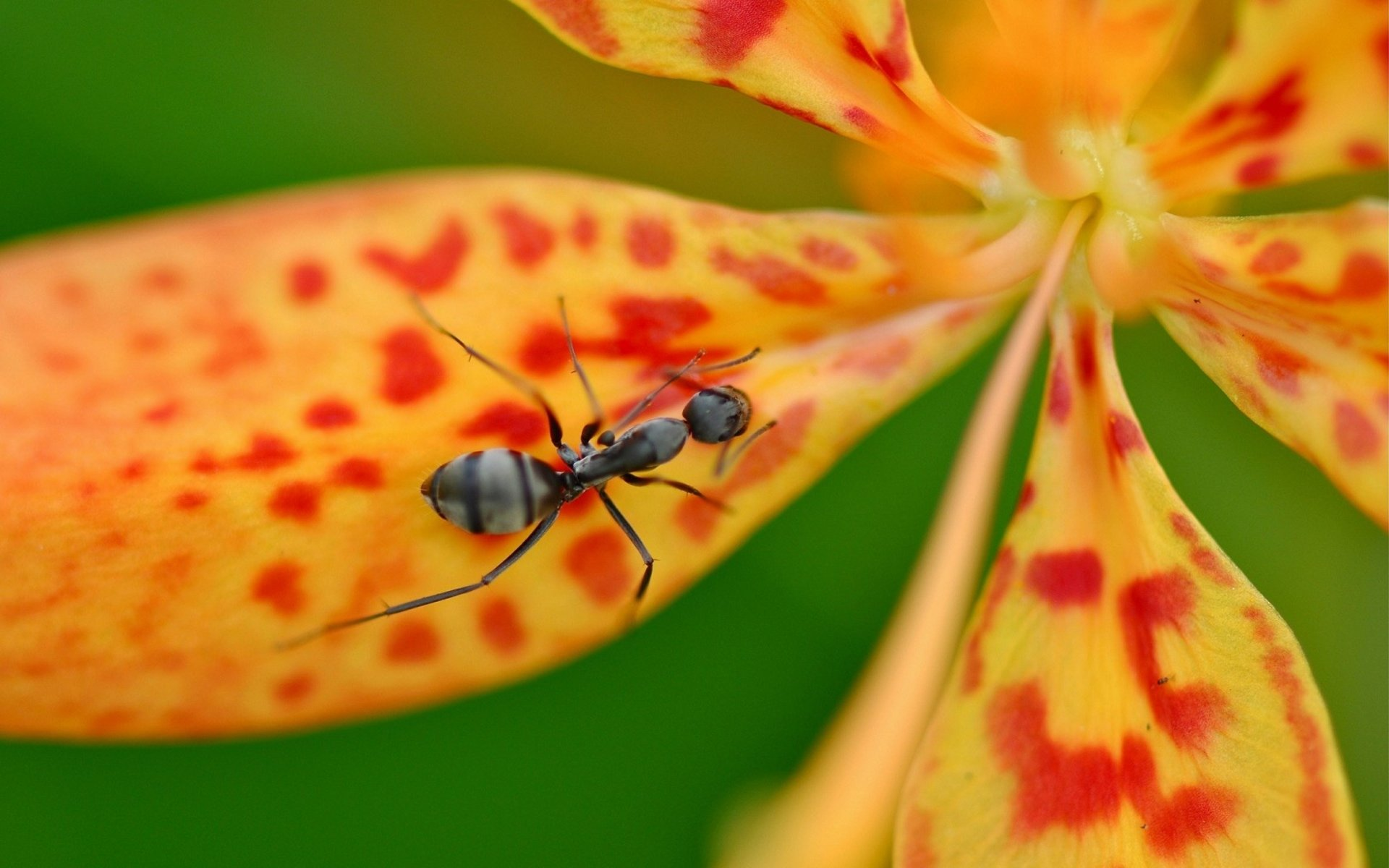 Awesome Ant free background ID:401337 for hd 1920x1200 computer