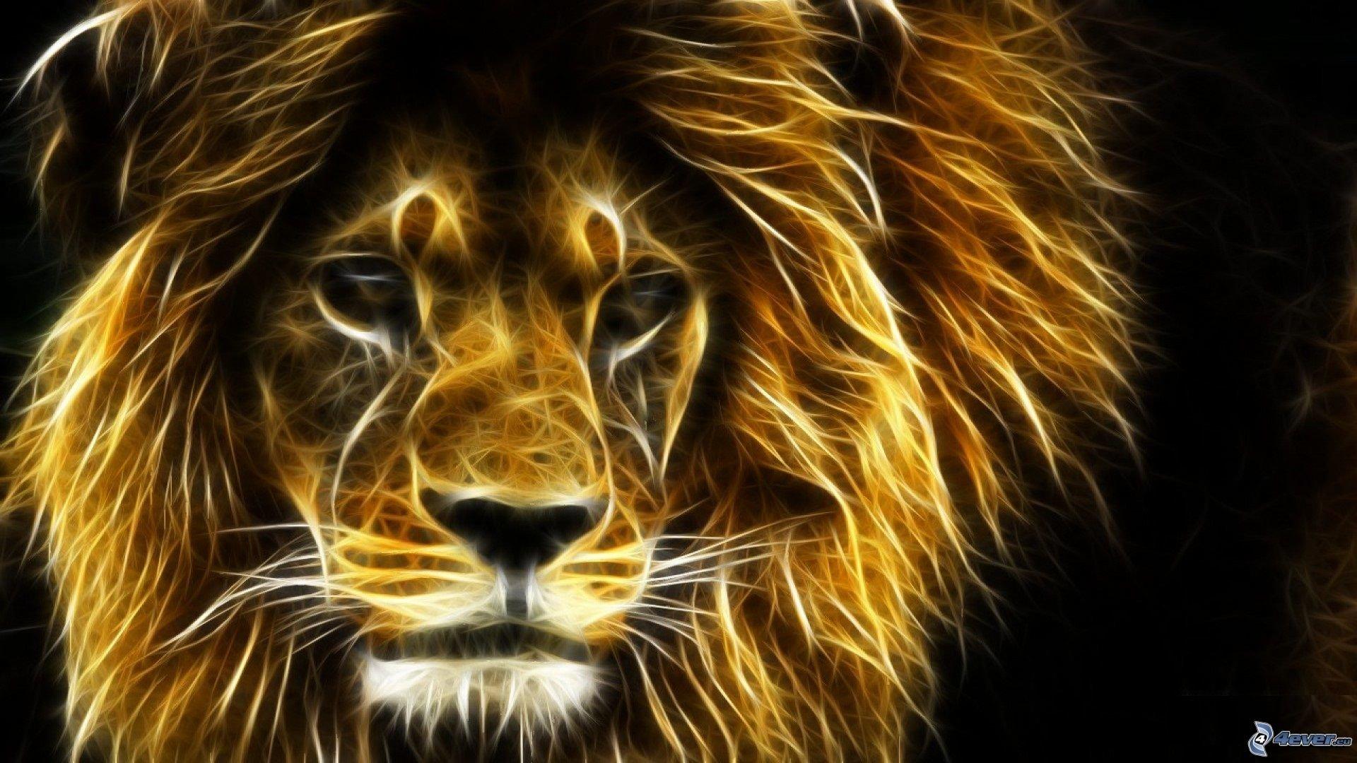 free lion high quality wallpaper id:256000 for full hd 1080p desktop