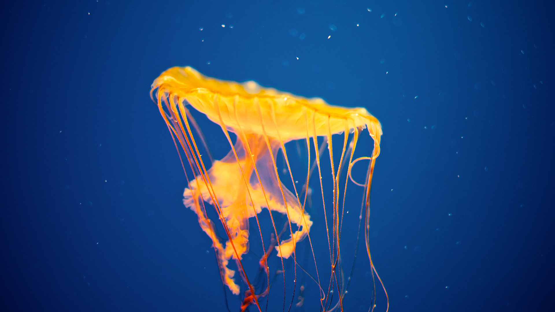 Best Jellyfish wallpaper ID:199818 for High Resolution full hd computer