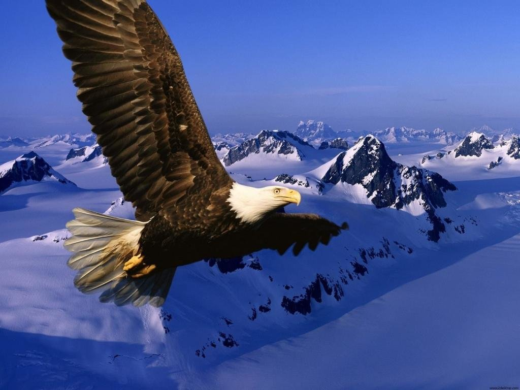 Free American Bald Eagle high quality wallpaper ID:68692 for hd 1024x768 PC