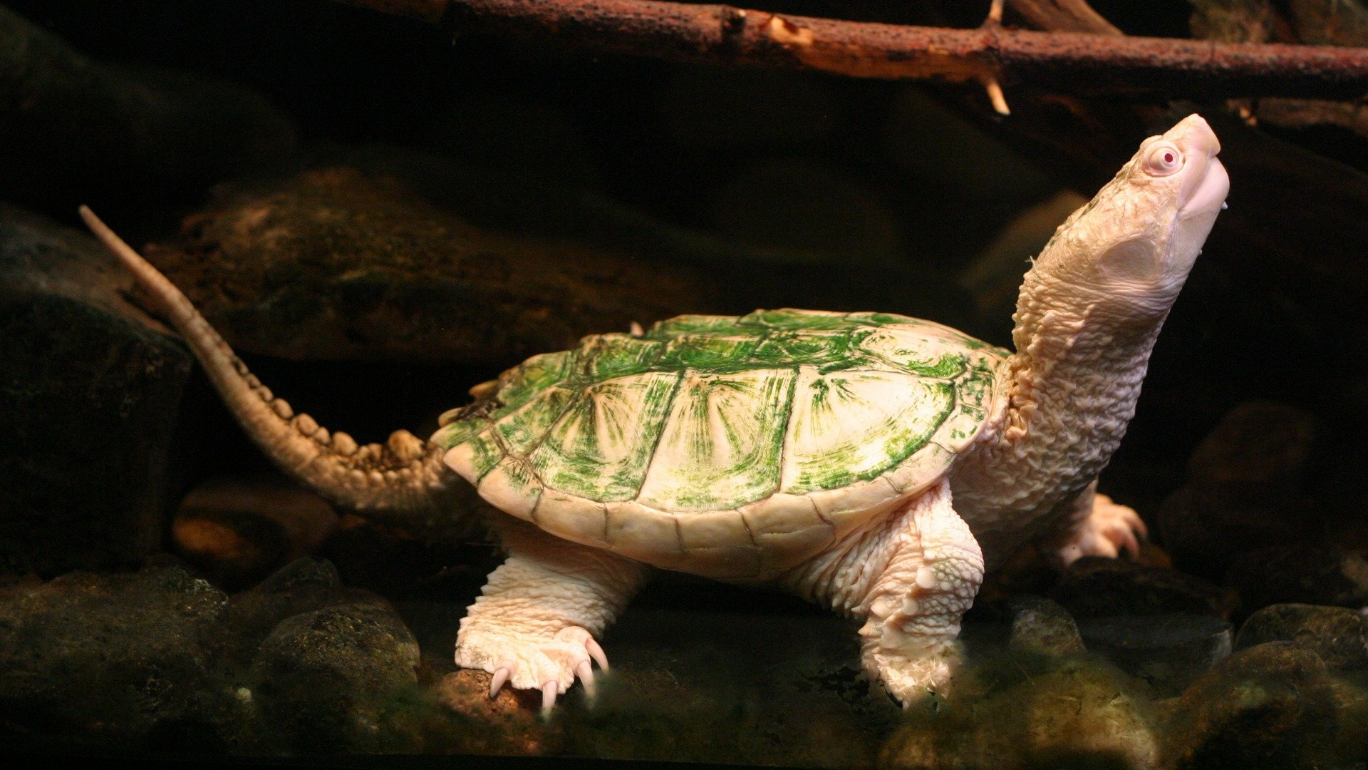 Free Turtle high quality background ID:29758 for full hd desktop